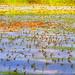 Uros Petrovic - Tisa River's Blooming
