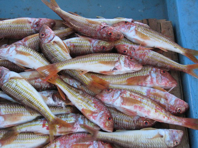 Smelly fish flickr photo sharing for Stinky fish in a can