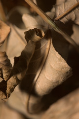 more dead leaves 2