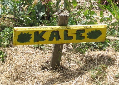 Kale sign in the Edible Schoolyard by Eve Fox, Garden of Eating blog