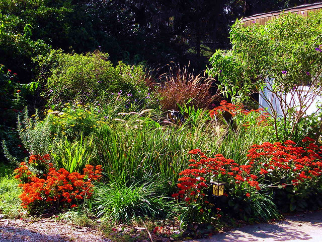 Tampa Landscape Design Winter Cottage Garden Flickr
