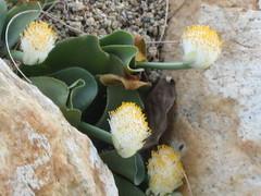 Flowers growing between rocks
