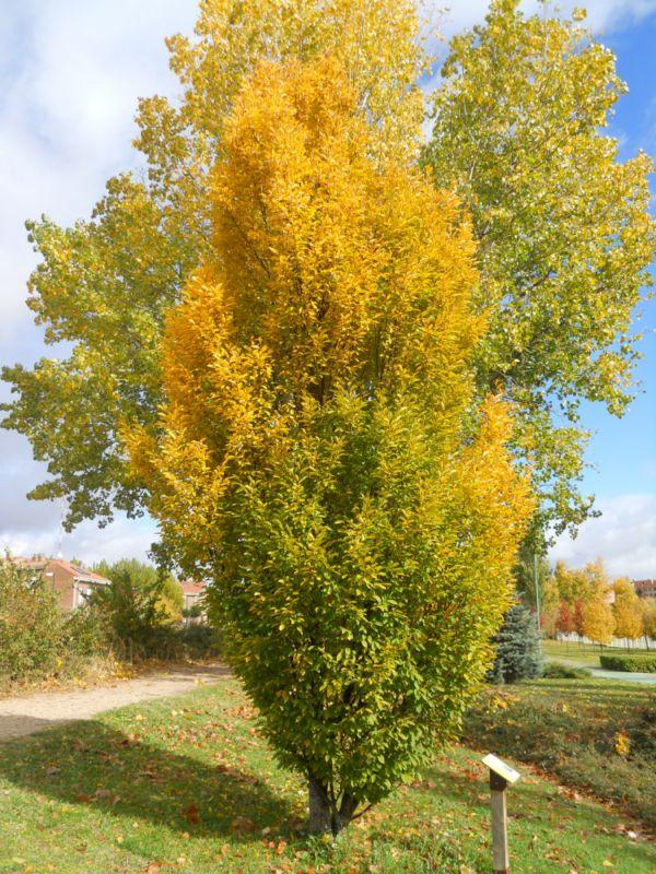 Carpe en otoño