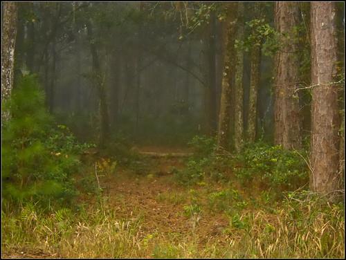 morning fog forest landscape woods nikoncoolpixl22