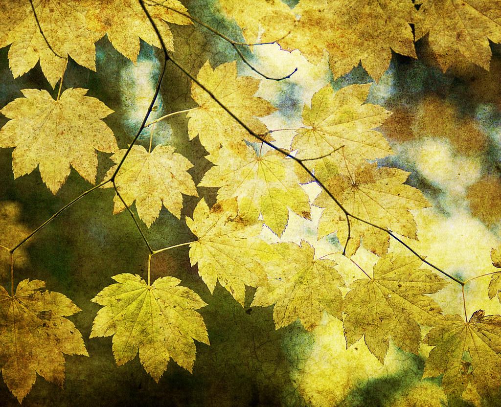 Leaf Zen T