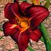 black flower by DandyBaby
