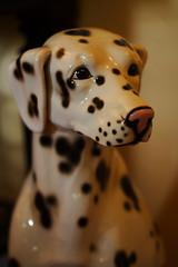 animal, pattern, dog, white, pet, mammal, dalmatian, design, close-up,