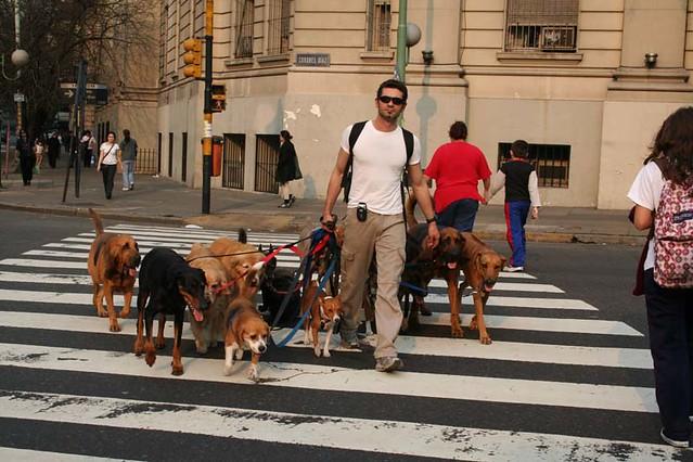 un paseador de perros por el barrio de Belgrano