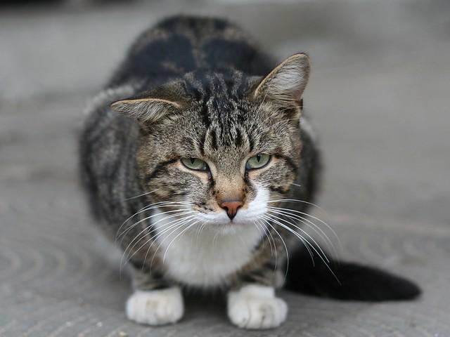 Cute Cat Homr