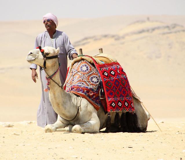 Bedouin in Aviators
