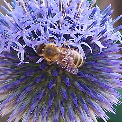 vermont bumblebee newport bombus naturesfinest oasispetresort