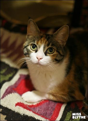 Linda (Rita's cat)