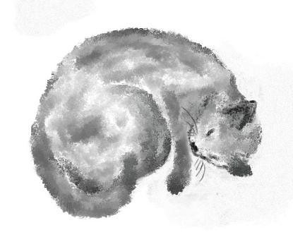 Study of sleeping cat.