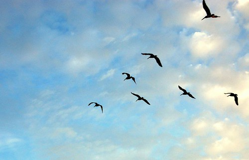 birds flying south