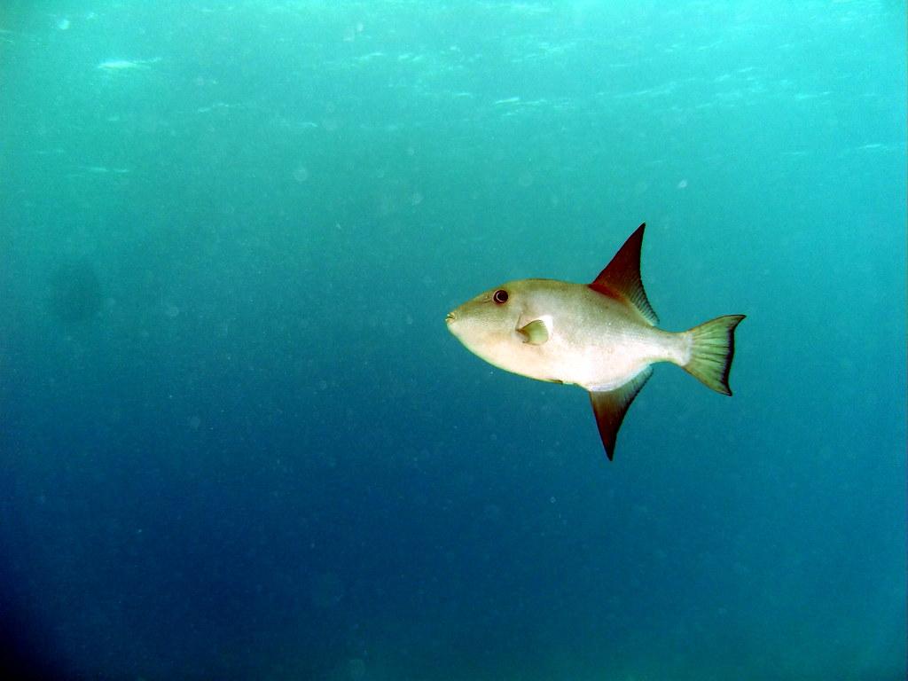 Ray-finned Fishes - Photo (c) Greg Grimes, algunos derechos reservados (CC BY-SA)
