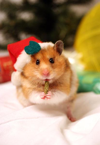 Hammy Holidays!