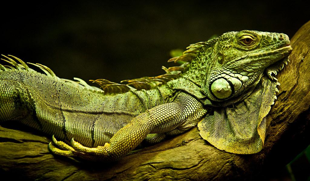 Reptile #2