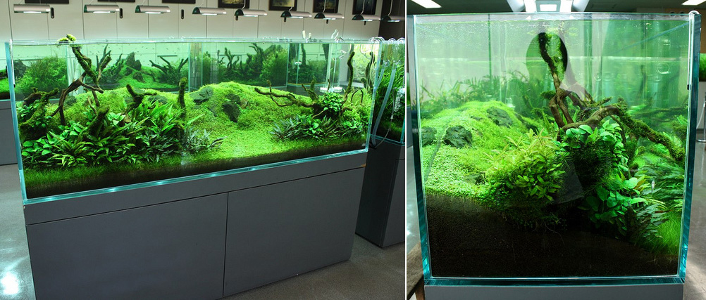 Albert namatjira inspired australian aquarium landscape for Ada fish tank