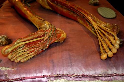 Wax Feet And Legs Exposed Tendons Flickr Photo Sharing