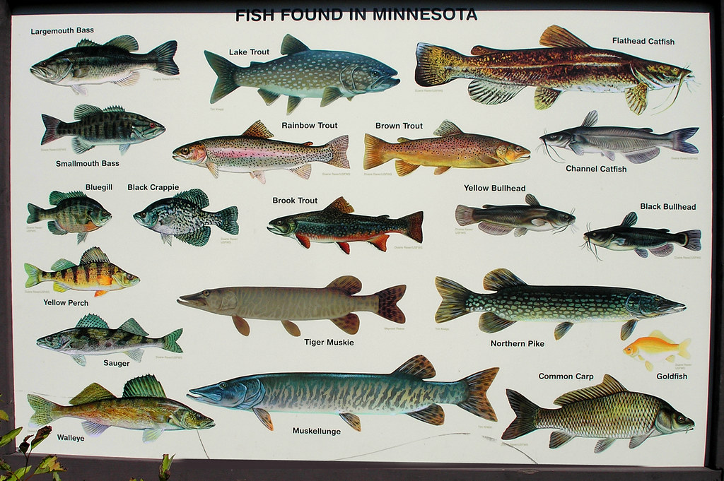 minnetonkascenes minnesota fish dnr state fair sign