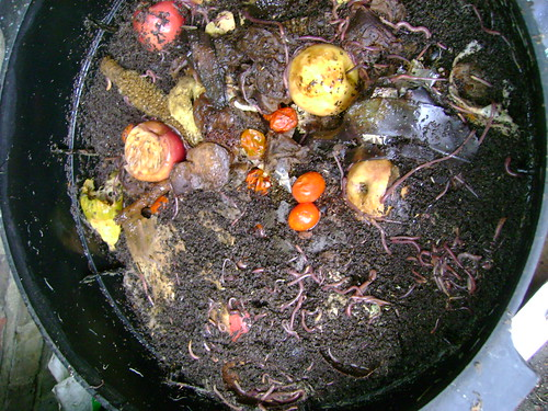 Wormery Mid Level: Food Waste & Worms