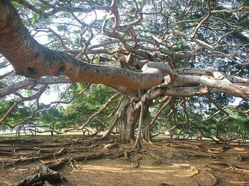 El árbol no cedía