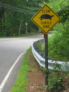 Funny Sign: Turtle Crossing