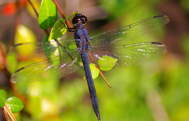 Pretty Dragonfly | Flickr - Photo Sharing!