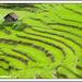 Manipur Landscpaes