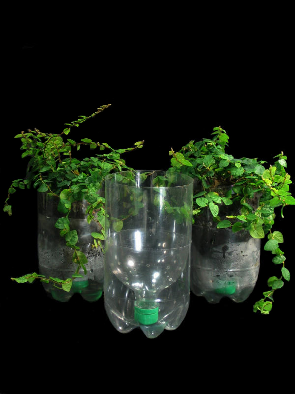 Recycled Plastic Bottle Planters | Flickr - Photo Sharing!