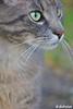 <p>Ob sie wirklich so heißt, weiß ich nicht ;-)<br /> ______<br /> A cat, but I don`t know if her name is really Lilli. ;-)</p>
