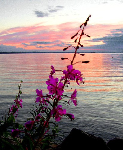 Rastaholm ~ sunset and flowers