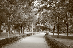 Parcul Tabacarie