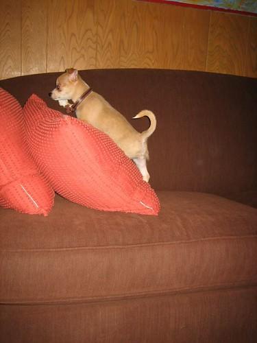 Cesar Pet Food Dog