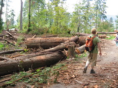 logging(1.0), woodland(1.0), soil(1.0), wood(1.0), tree(1.0), forest(1.0), natural environment(1.0), jungle(1.0),