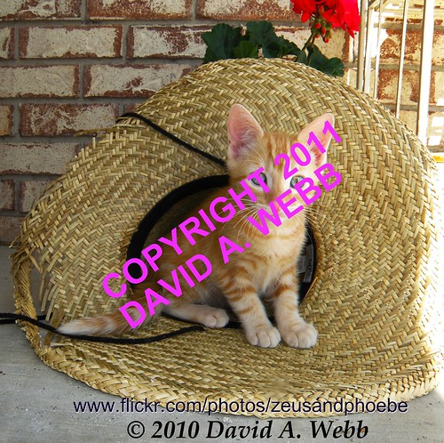 red usa pet cats pets cute classic animal animals cat fur photography ginger utah chats kitten feline chat tabby adorable kitty olympus whiskers gato precious kitties gata tabbies felines spotted adopt gatto provo striped furbaby adoption gatta furbabies catnipaddicts