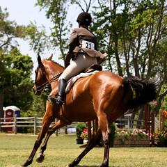 animal sports, equestrianism, eventing, dressage, mare, stallion, equestrian sport, rein, sports, recreation, outdoor recreation, bridle, horse,