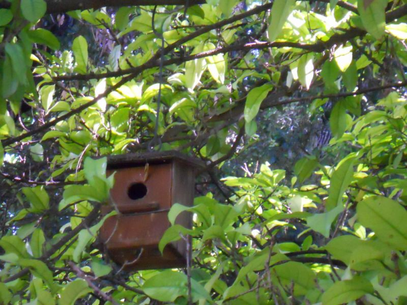 Cómo evitar que los pájaros dañen la cosecha del huerto