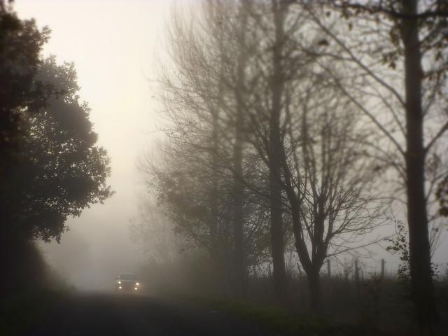 Fog Car Games Download
