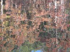 Autumn Colors Lake Crabtree NC 0464