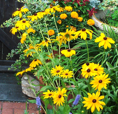 Low maintenance container flower plants for Low maintenance outdoor potted plants and flowers