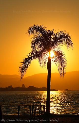 silhouette brasil backlight canon contraluz landscape rebel bolivar paisagem santacatarina trindade palmeira silhueta beiramarnorte xti duetos aplusphoto bolivartrindade©allrightsreserved