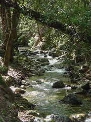 nature reserve, stream, woodland, rainforest, leaf, tree, rapid, creek, body of water, watercourse, forest, natural environment, ravine, wilderness, state park, jungle, vegetation,