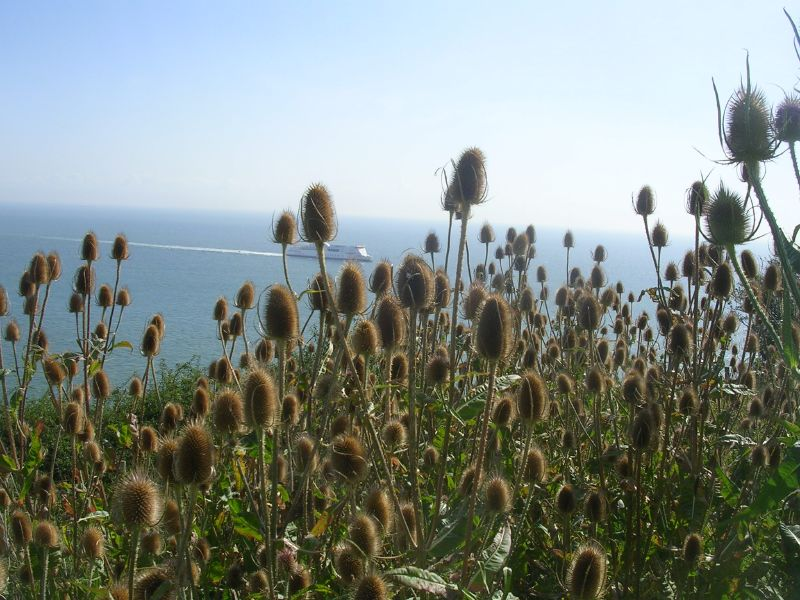 teasel Dover to Deal