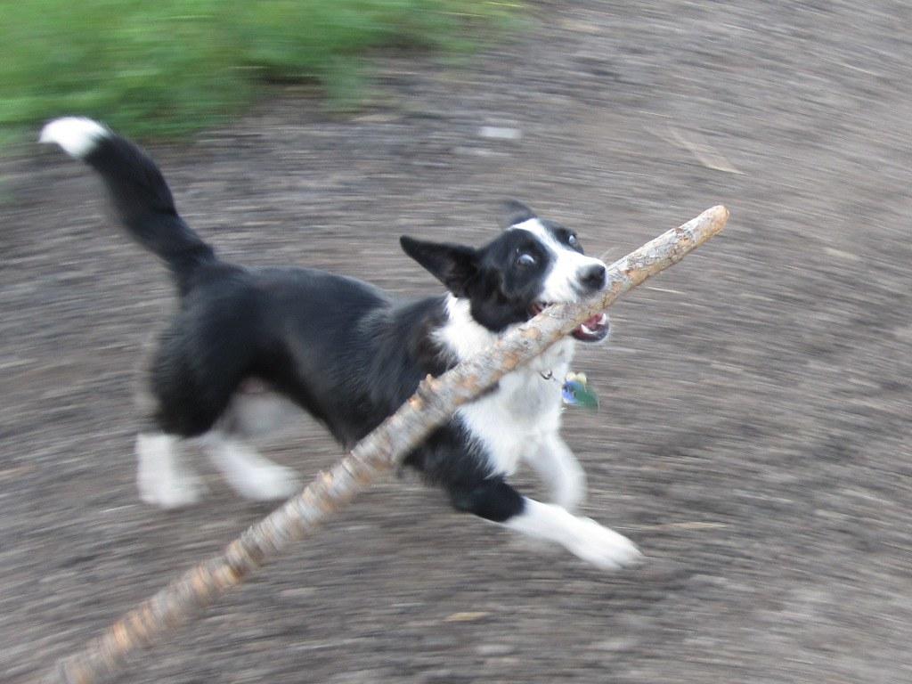I has a stick!