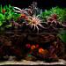 Discus_Chameleon paludarium by jsenske by goozaa55