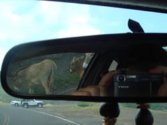 rear view donkey