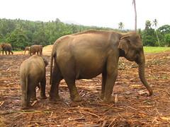 Healthy Elephant