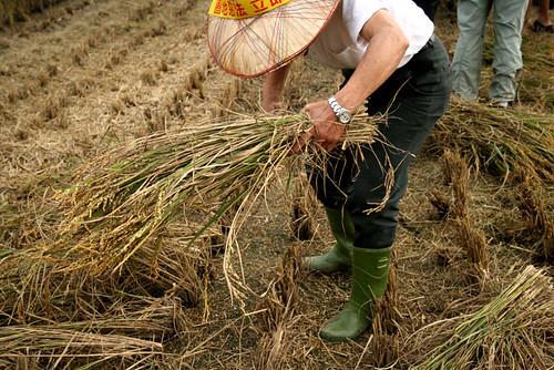 以有機耕作取代依賴石油的糧食生產,並且兼顧生態、對農民公平以及謹慎關懷的原則,才能讓社會永續。
