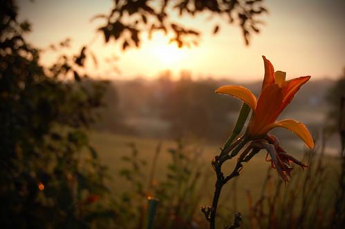 morning sunset wallpaper orange sun plant flower grass outside outdoors outdoor dew outline striking d40